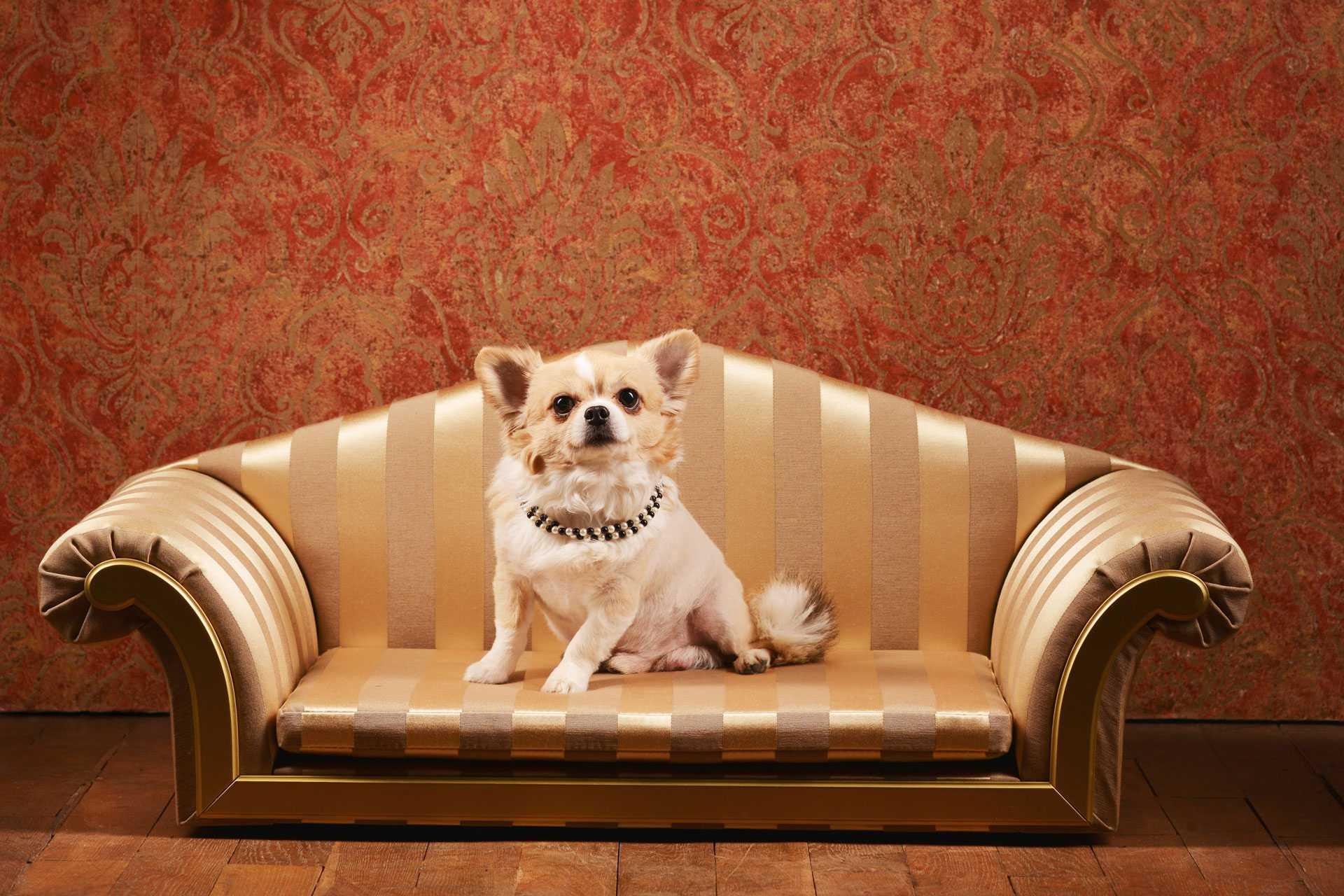 犬用の家具1
