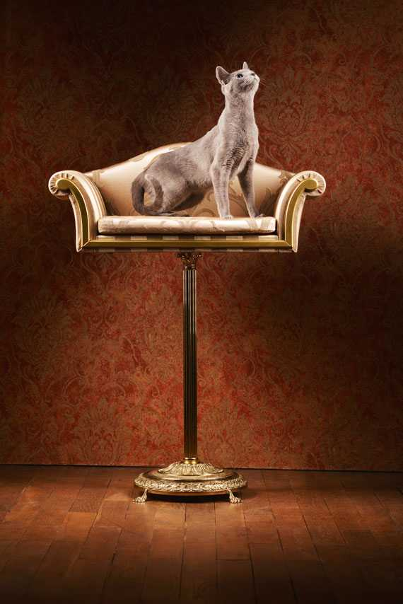 ペット用のイタリアン家具