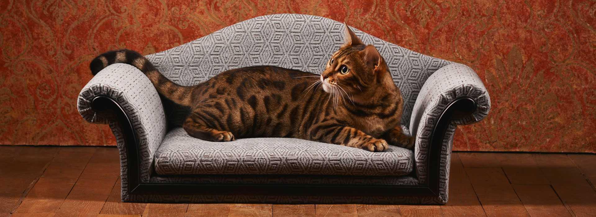 ペット用の家具6