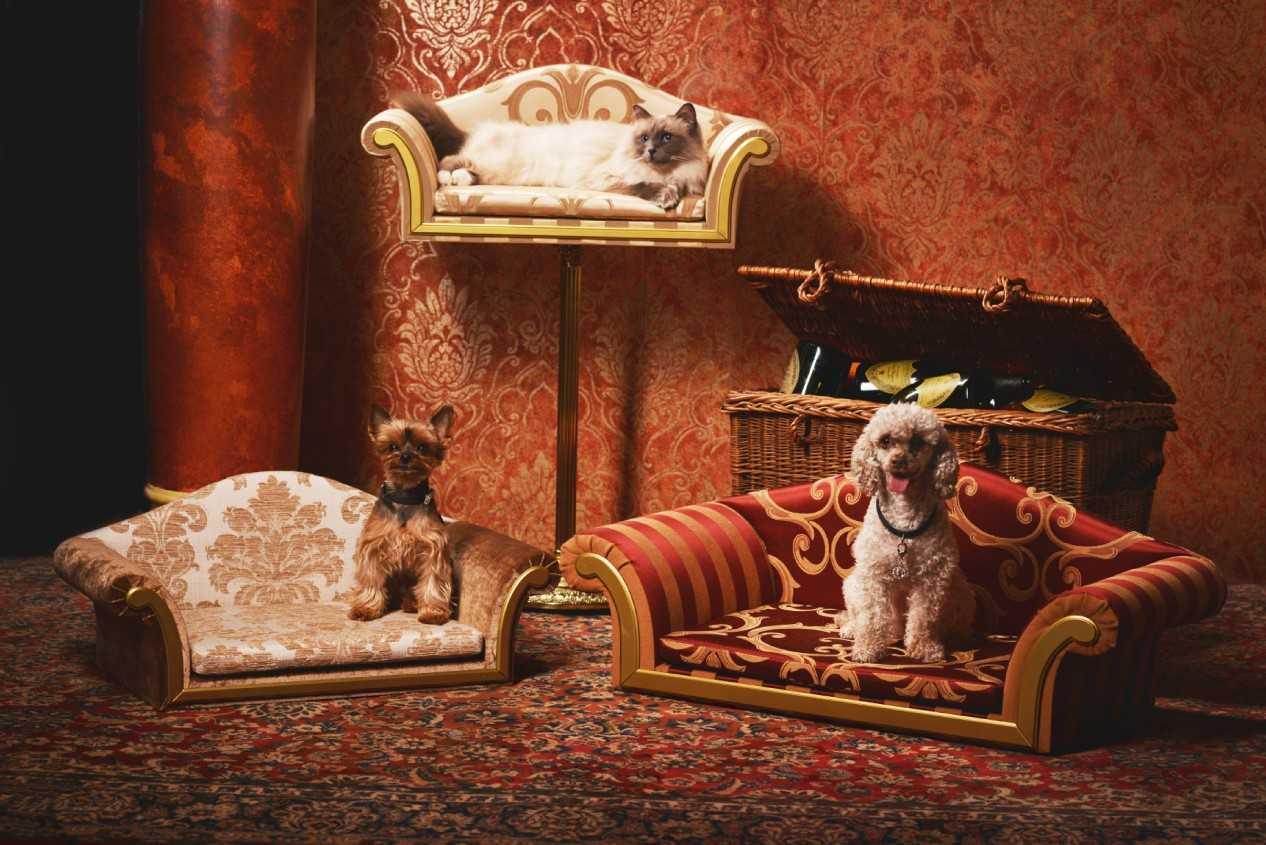 luxusní nábytek pro domácí mazlíčky15