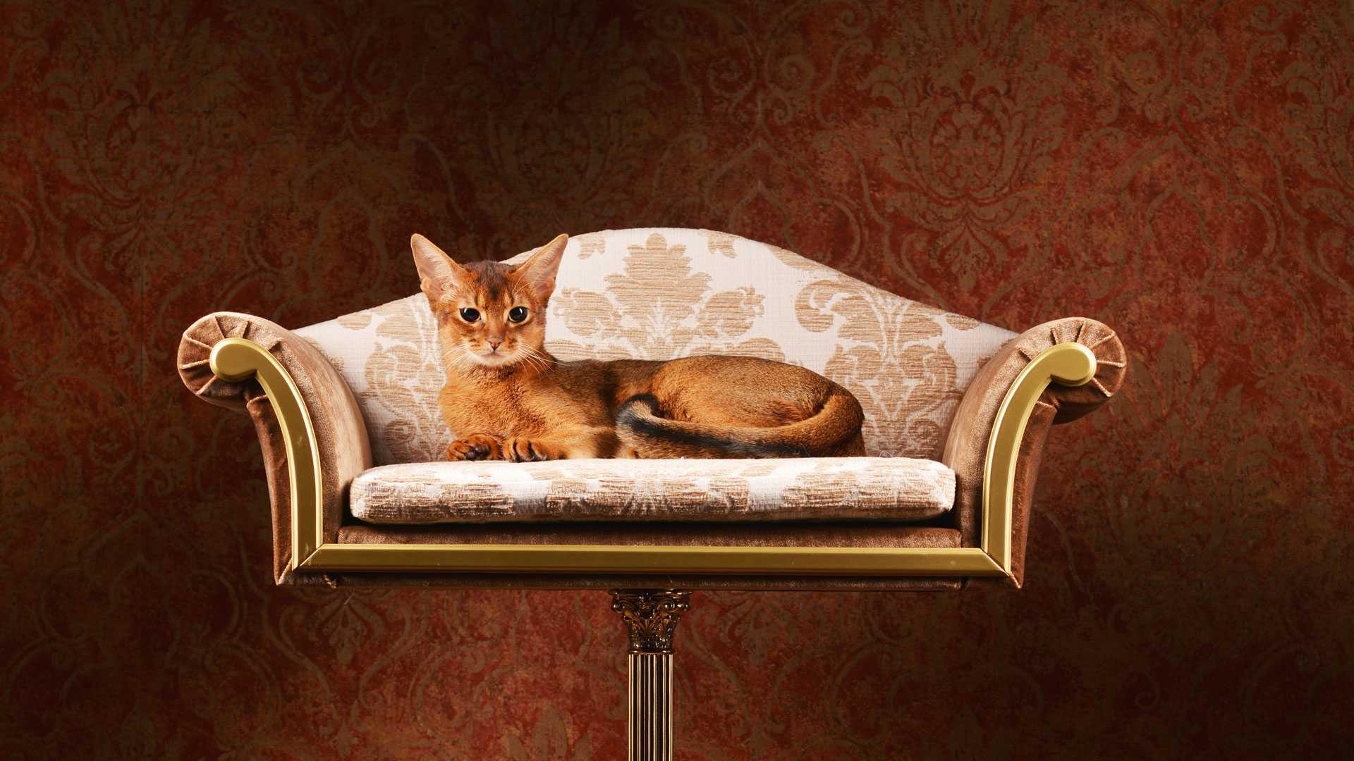 luxusní pelíšek pro domácí mazlíčky 5